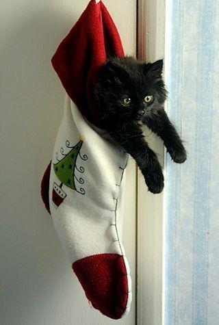 61 Best Black Cat Christmas Images On Pinterest Black