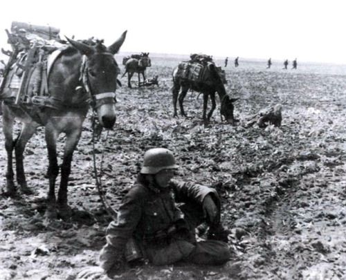 Pack mule handlers rest with their animals. The vast distances in which these animals and their handlers had to travel can well be imagined. Typical Russian steppes comprised of nothing but vast expanses of flat terrain, stretching for as far as the eye could see. Due to the visible landmarks, units were often unable to determine their exact location.