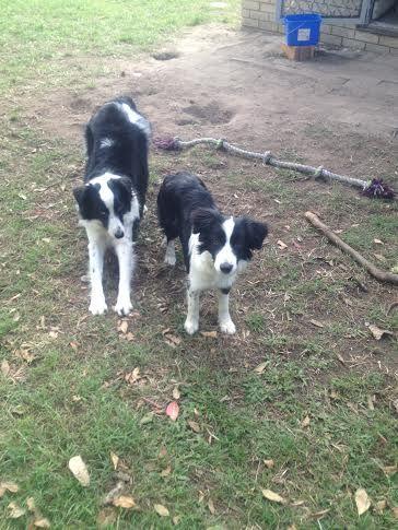 PADDY/PAMMY.........................TOGETHER BOTH! dogsbigdayout.com.au