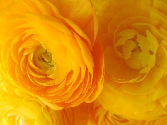 Sanctum Sanctorum - Macro Flower Photograph via Etsy