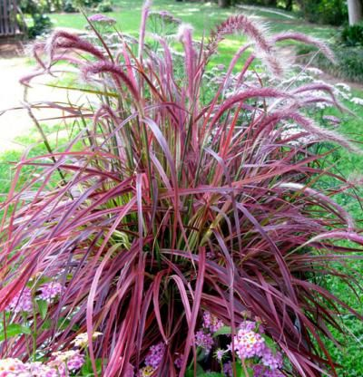 172 best images about landscaping ideas on pinterest for Typical landscaping plants