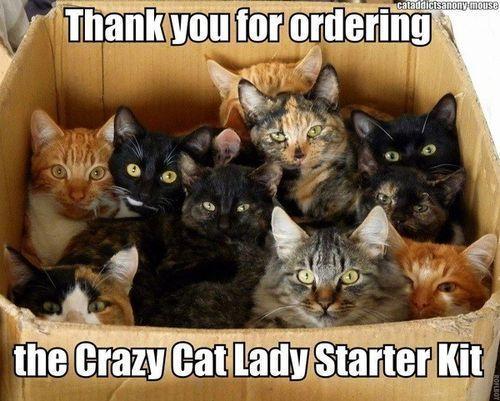 The crazy cat lady starter kit.: One Day, My Sisters, Lady Starters, Crazycatlady, Crazy Lady, Starters Kits, My Life, Funny Stuff, Crazy Cat Lady