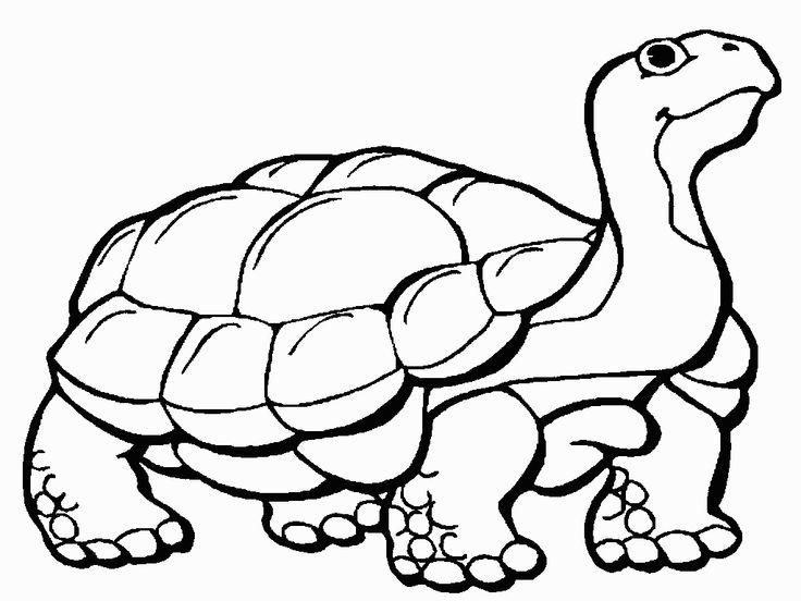 37 best Turtle coloring pages images on Pinterest Coloring books