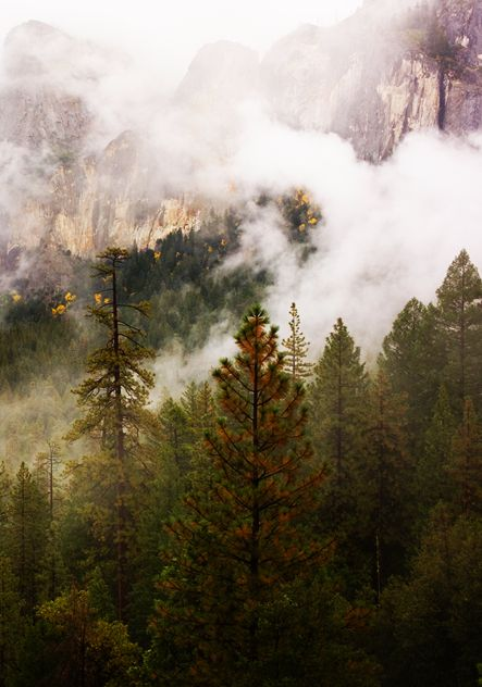 yosemite national park fog - photo #40