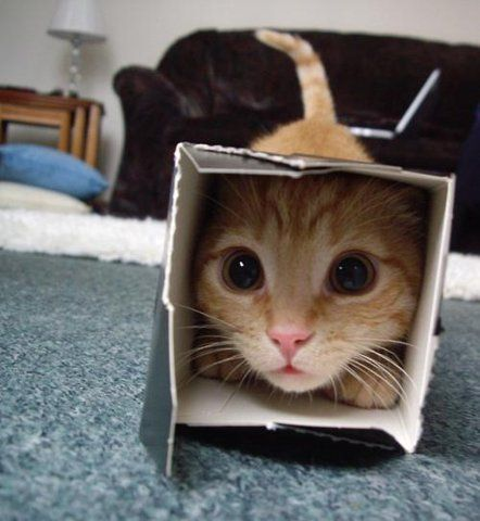 Teeheehee! Judging by the silly dilated eyes, I'd say this kitty is having the time of his life with that box! Lol!