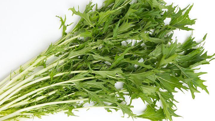 Er zijn ontzettend veel bladgroente, en hoewel deze plant er alles van weg heeft, is het eigenlijk een kool. Gek, vind je niet? Mizuna is makkelijk te kweken, groeit goed en is nauwelijks gevoelig voor nachtvorst. Maak kennis met een eetbare plant uit Japan! Geen bladgroente, maar een kool Ook deze plant is eetbaar en…