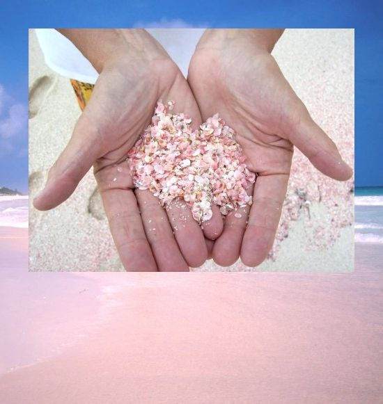 Tiny pink shells on Harbor's Island pink sand beach. I want a jar full! Featured here: http://beachblissliving.com/pink-sand-beach/