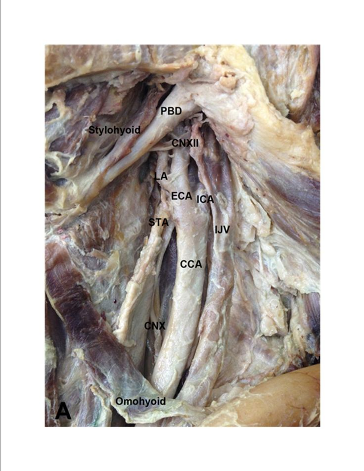 anatomy and physiology dictionary pdf