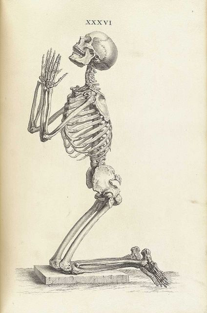 With its novel vignettes and its use of a camera obscura in the production of the plates, William Cheselden's lavishly illustrated Osteographia or the Anatomy of the Bones, is recognized as a landmark in the history of anatomical illustration.
