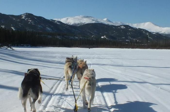 Winter 2013. Sled dogs and mountains, in the Yukon From Melena Spinney's pictures.