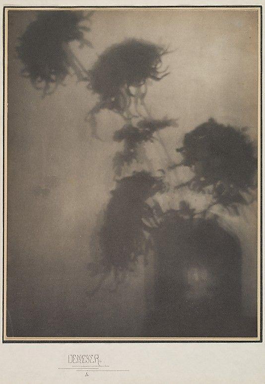 "The Shadows on the Wall. ""Chrysanthemums""     Adolf de Meyer  (American (born France), Paris 1868–1949 Los Angeles, California)  Source: venusmilk"
