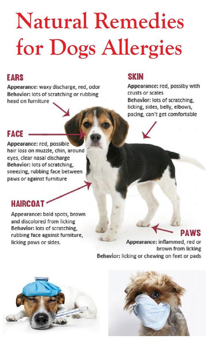Dog Allergy Remedies Dog Allergies Remedies Dog Remedies Dog Allergies