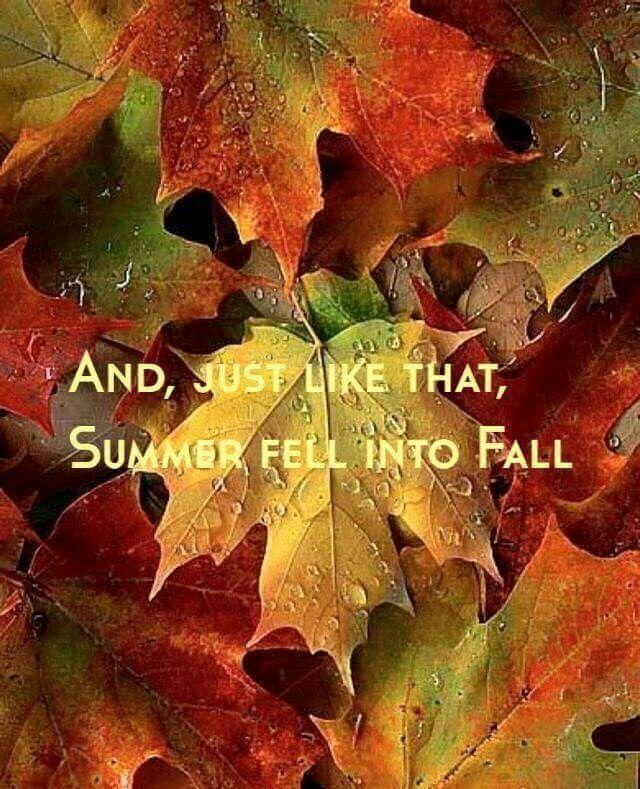 Summer Fell Into Fall