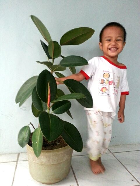 Agak aneh dan mungkin ada yang mengagapnya gila; kalau ada yang berbicara dengan tanaman. Tanaman seperti halnya mahluk Allah yang lain, tanaman juga punya 'perasaan' dan bisa merespon rangsangan d...