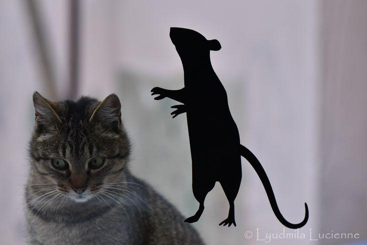 Ryska and guest :) Риська та гість :)  #Ryska #huntress #animal #home #pet #predator #game #mouse #look #muzzle #emmaline #rodent #cat #game #hunt #light #shadow #nikon  #originalcontent