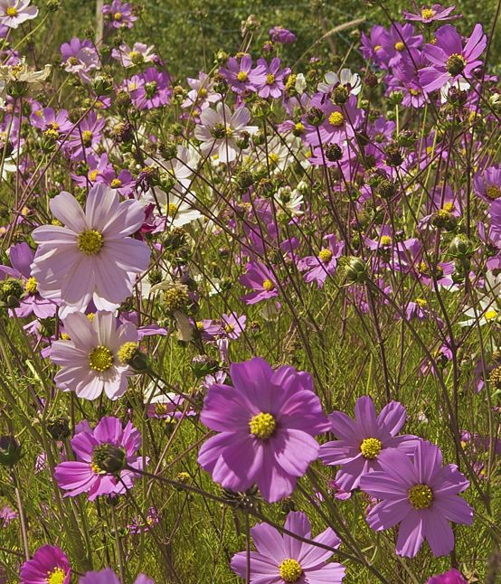 Wild flowers along the highway.