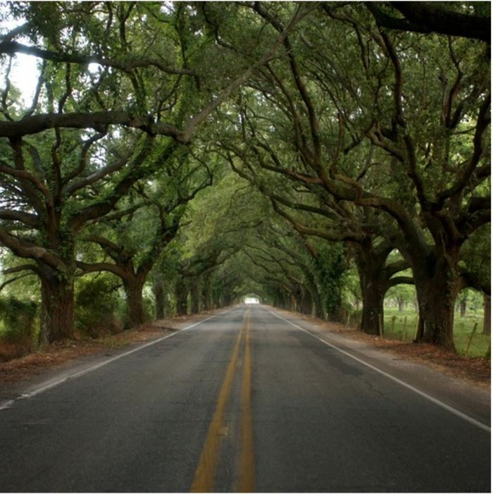 Take These 9 Country Roads In Louisiana