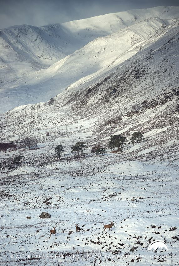Glen Affric landscape in the Highlands of Scotland. Beautiful tourist destination for sightseeing when traveling and going on road trips. Great landscape to take beautiful photography and when planning on things to do in Scotland.