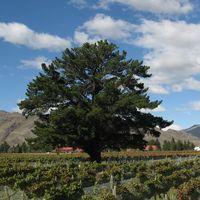 Cromwell Central Otago Weddings - beautiful vineyard setting