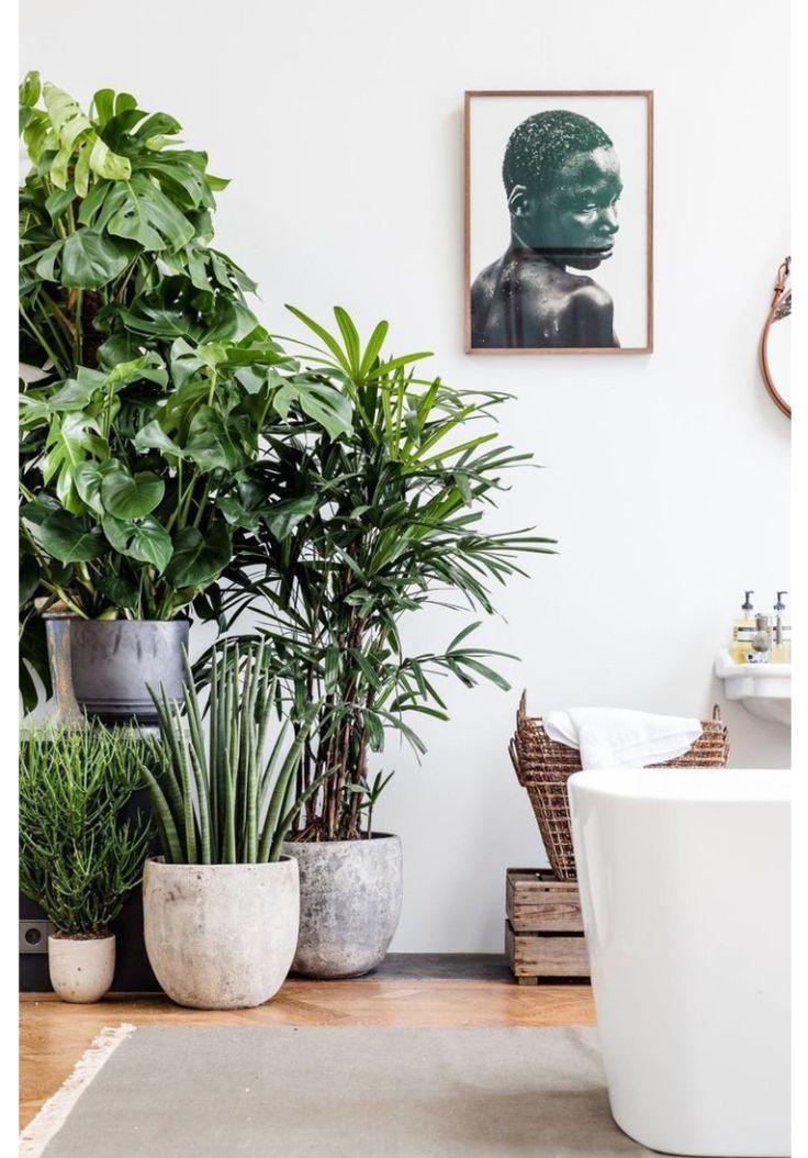 Nog altijd verliefd op een overdosis aan planten thuis