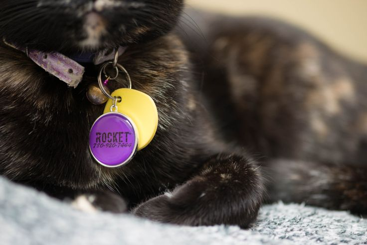 CUSTOM Simple Cat Collar Tag, Kitten ID, Kitty Pendant, Colorful Accessory, Cat Mom Accessories, Collar Jewelry, Small Dog Pendant A-00006 by FootprintsOnVenus on Etsy