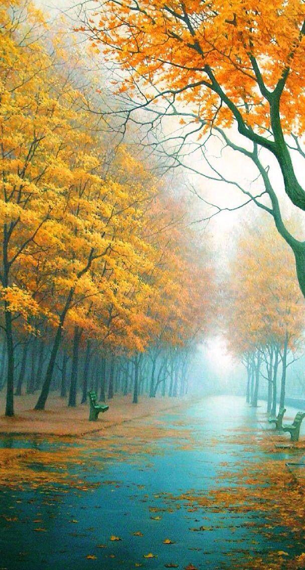 Rainy or foggy pathway.