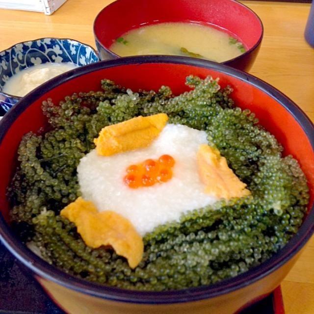 旅行前からの私の念願、海ぶどう丼(^o^) 昨日も海ぶどうを食べましたが、全然飽きません  まだまだまだひつこく沖縄UPが続きます - 183件のもぐもぐ - 沖縄⑦2日目ランチ。                               恩納村にて「元祖海ぶどう本店」の名物海ぶどう丼                                                Sea- Grape and Sea urchin topped rice at Onna vi by yoriko