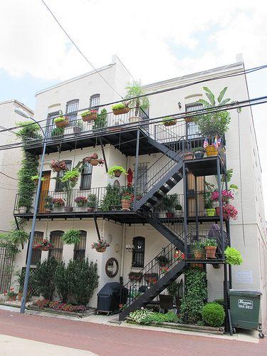 cool fire escape garden