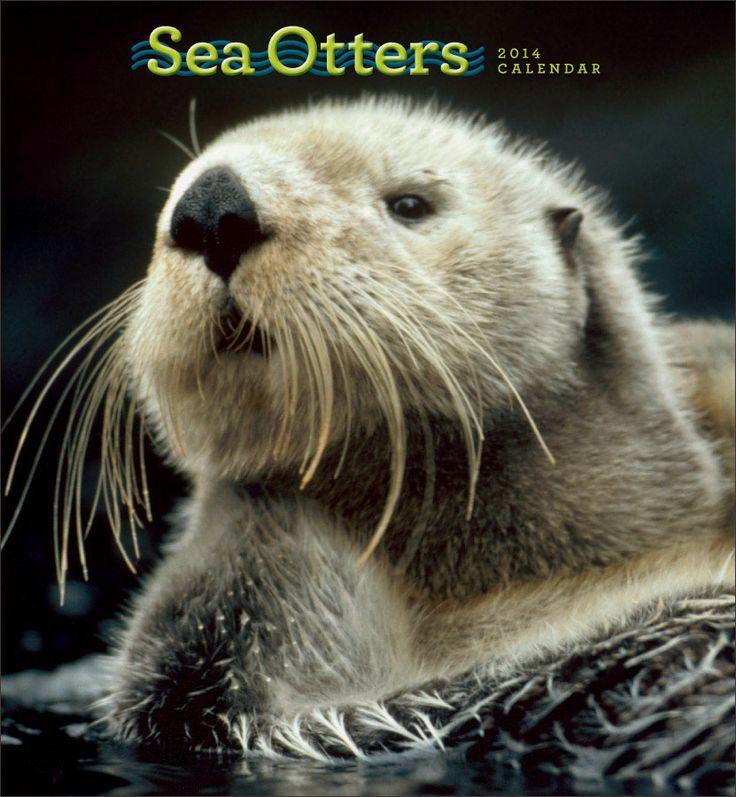 Sea Otters 2014 Wall Calendar