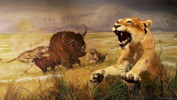 Cave lions (Panthera leo spelaea) were fierce predators (Credit: Hemis/Alamy)