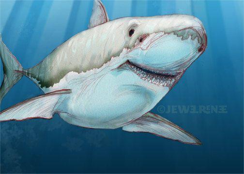 556 best great white sharks two images on pinterest for Blue fish pediatrics