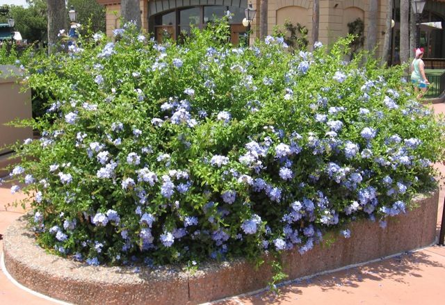 Garden Centre: 71 Best Images About Guide To Texas Plants On Pinterest