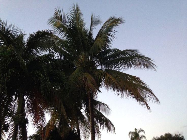 Fresh air = nature's medicine #sunshinestate #paradise #palmtree #coconuts   #expressdocs #urgentcare #delray #delraybeach #southflorida #soflo #sofla #medicalcare #medicalcenter