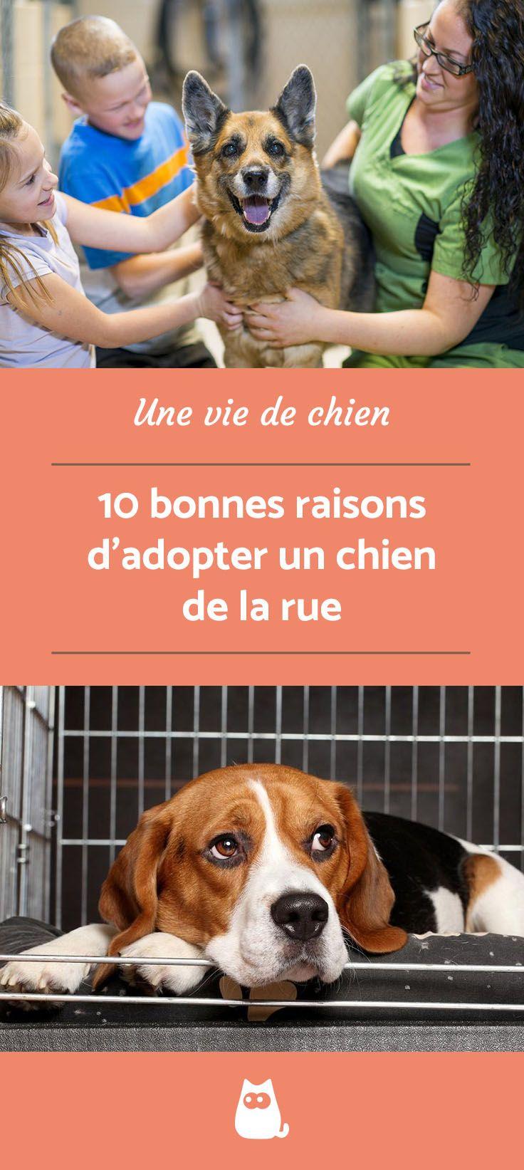 10 Bonnes Raisons D Adopter Un Chien De La Rue Adopter Un Chien Adoption Chiot Chien