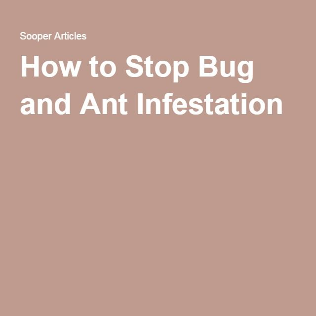 How to Stop Bug and Ant Infestation