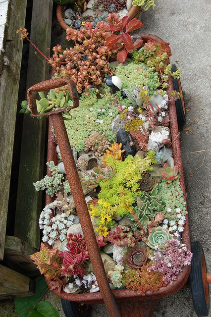 I love rusty old containers and succulents. You can do this with anything. Old wheelbarrow, old tomato tins. Anything that is metal and likely to rust is perfect.