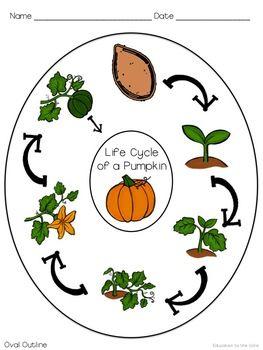 FREE PUMPKIN LIFE CYCLE GRAPHIC ORGANIZER   #fall #pumpkin #homeschool