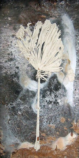 "Anselm Kiefer, Palmstern, 2008, Plaster, branch, red clay in a glass and metal frame, 110 x 55""."