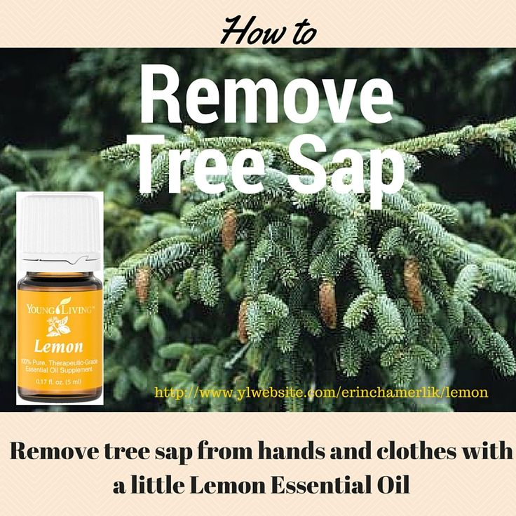 How to Remove Tree Sap From Hands and Clothes: Lemon Essential Oils. Young Living.