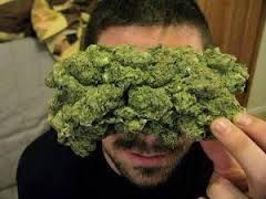 BUY MARIJUANA ONLINE Go to : www.realweedshop.com   DELIVERY IS DONE TO ALL 52 STATES IN USA, CANADA, UK, AUASTRALIA AND EUROPE WITH QUICK, DISCREET AND SECURED SERVICES