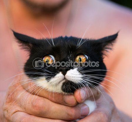 Прекрасный котенок в руках любящий хозяин — Стоковое фото © kulkann #118576720