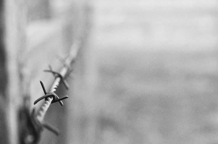 Barbed wire. Edited in photoshop.  Photographed in 2016. Credit me of you are going to use it.