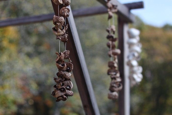mushrooms, Colonial Food Drying: Gardenista