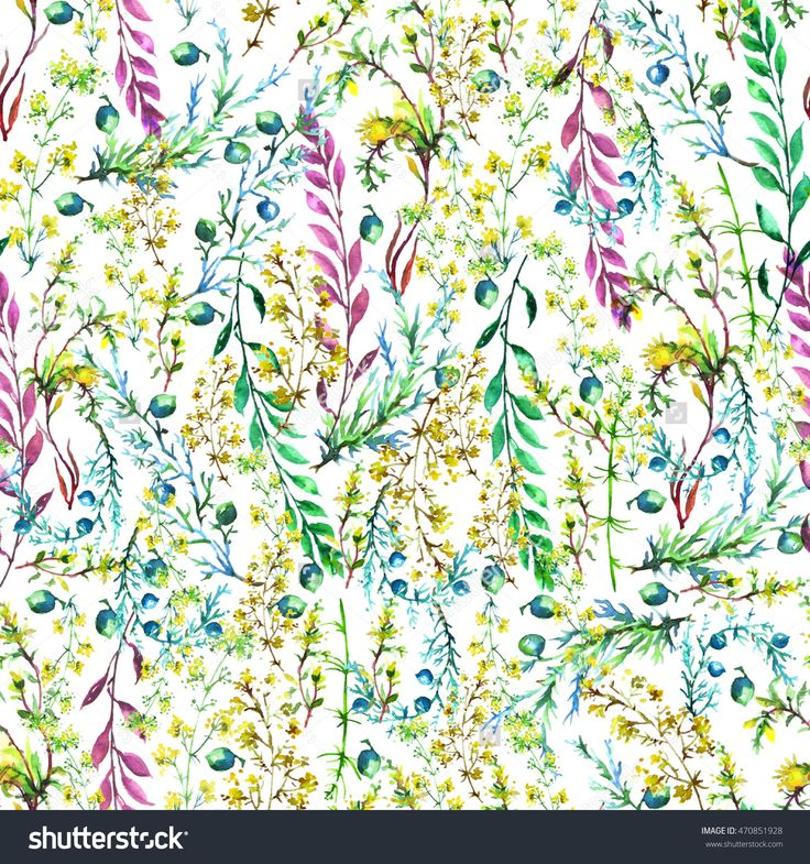 Herbs. Watercolor Vintage Seamless Pattern Of Grasses, Wildflowers, Wild Plants, Leaves And Juniper Berries. Use For Various Design. . Illustration Is Made Of Hand-Made In Clipart Graphics Colors - 470851928 : Shutterstock