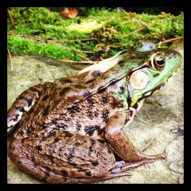 Our pond buddy