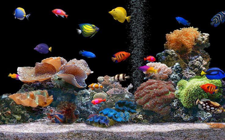 fish tropical poisson - photo #30