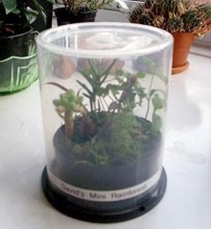 Mini greenhouse! Start a Plant in a CD Spindle Case