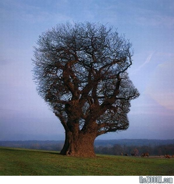 pink floyd album covers | Pink Floyd's Tree of Half Life album cover by Storm Thorgerson