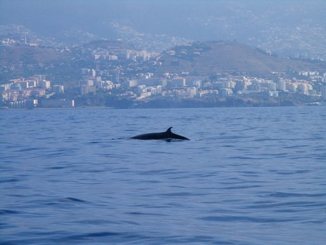 Explore Visit Madeira photos on Flickr. Visit Madeira has uploaded 1297 photos to Flickr.