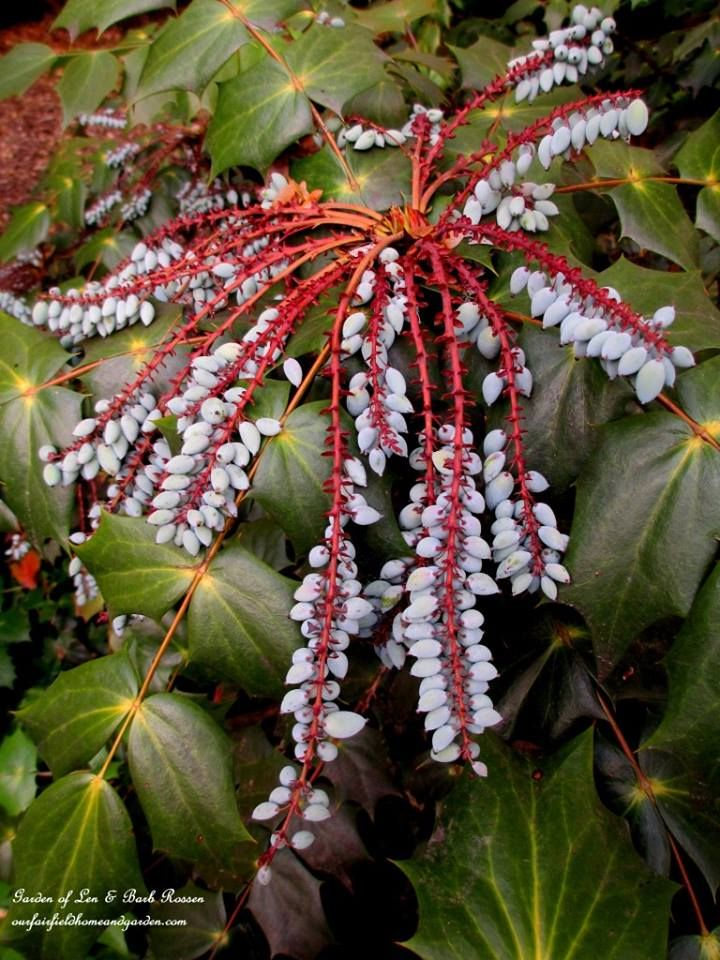 101 Best Plants Zone 7 Images On Pinterest Landscaping